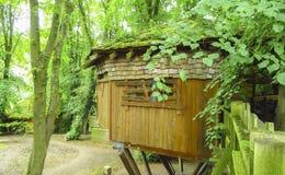Cabane dans un arbre en bois d'Alnwick, arbres verts, jardin d'Alnwick, dans le comté anglais du Northumberland Image libre de droits