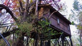 Cabane dans un arbre sur l'arbre vivant de miel d'arbre de mahua aka ou l'arbre de beurre image libre de droits