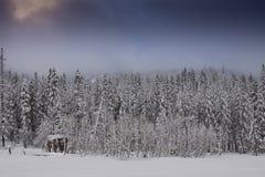 Cabane froide de forêt de l'hiver photos libres de droits