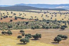 Cabaneros国家公园 dehesa,传统牧人mana 库存照片