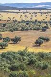 Cabaneros国家公园 dehesa,传统牧人mana 免版税库存照片