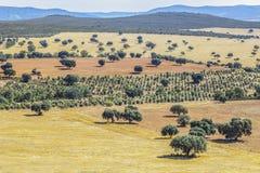 Cabaneros park narodowy Dehesa tradycyjny pastoralny mana Fotografia Stock