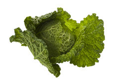 Cabbage. Fresh green cabbage isolated on white background stock photography