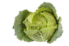 Cabbage. Isolated on white background royalty free stock photos