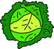 Cabbage. Savoy green leafy cabbage isolated on white drawn in toddler art style stock illustration