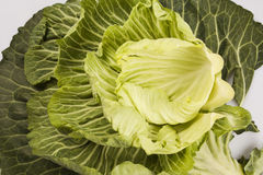Cabbage. Portuguese cabbage with stacked leaves Royalty Free Stock Images