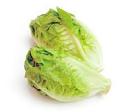 Cabbage. Green cabbage on white background Stock Image