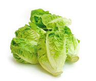 Cabbage. Green cabbage on white background Royalty Free Stock Photo
