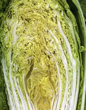 Cabbage. A cabbage section, green ,yellow, green and white Stock Photography