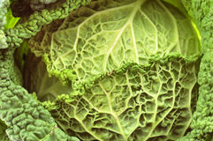 Cabbage. Close-up on the table Royalty Free Stock Images