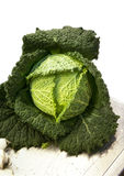 Cabbage. Close up fresh green cabbage Royalty Free Stock Photo