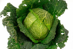 Cabbage-3. Fresh, green cabbage.Italian cabbage's head Stock Photography