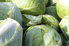 Cabbage royalty free stock photos