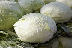 Cabbage Stock Photography