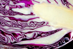 Cabbage anatomy Stock Photography