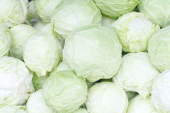 Cabbage arrange in a row Royalty Free Stock Images