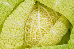 Cabbage as background of bends Stock Image