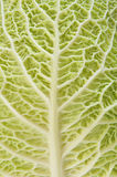 Cabbage as texture of bends Royalty Free Stock Photography