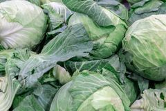 Cabbage background, Fresh cabbage from farm field, Close up macro view of green cabbages. royalty free stock photos