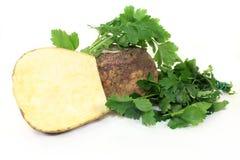 Cabbage beet Stock Image