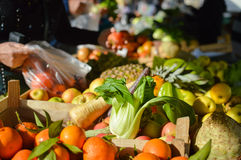 Cabbage Bok Choy among fruit and vegetables at farmers market Royalty Free Stock Image