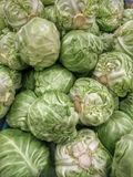 Cabbage. Or headed  & x28;comprising several cultivars of Brassica oleracea& x29; is a leafy green or purple biennial plant, grown as an annual vegetable crop Royalty Free Stock Photography