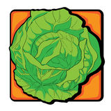 Cabbage clip art Royalty Free Stock Photo