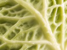 Cabbage close up. A close up on fresh green Cabbage Stock Photo