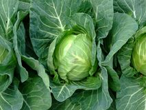 Cabbage close up Royalty Free Stock Images