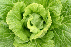 Cabbage Closeup Royalty Free Stock Photography