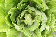 Cabbage Closeup Stock Photography