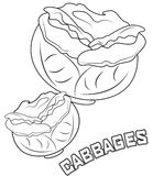 Cabbage coloring page Stock Photos