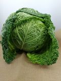 Cabbage with curly leaves Stock Image