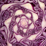 Cabbage cut Stock Images