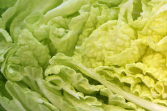 Cabbage Cut Stock Image