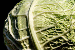 A cabbage cut in half Stock Image