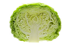 Cabbage cut in half Royalty Free Stock Photo