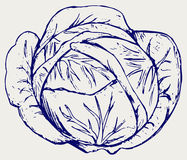 Cabbage. Doodle style Stock Images