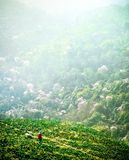 Cabbage farmers on a hill royalty free stock photos