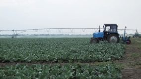 Cabbage fertilizer. Tractor and field irrigation stock video