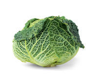 Cabbage fresh savoy head Royalty Free Stock Photos