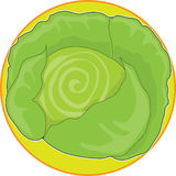 Cabbage Graphic Royalty Free Stock Photos