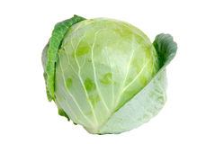 Cabbage green Stock Photography