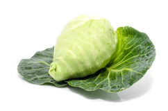 Cabbage with green large leaves grows isolate Stock Images