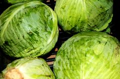 Cabbage in the grocery. Cabbage has been used historically as a royalty free stock image