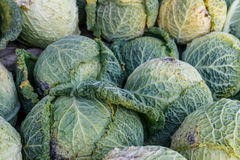 Cabbage group from a marketplace Stock Photo