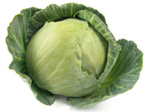 Free Cabbage Head Stock Images - 13917604