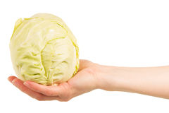Cabbage head in  female hand isolated on white background. Stock Photography