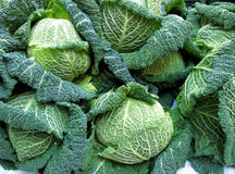 Cabbage Heads royalty free stock photography