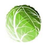 Cabbage Icon. Flat Color Ladder Design. Vector Illustration stock illustration